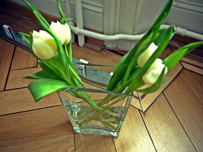 Tulpen weiss.jpg