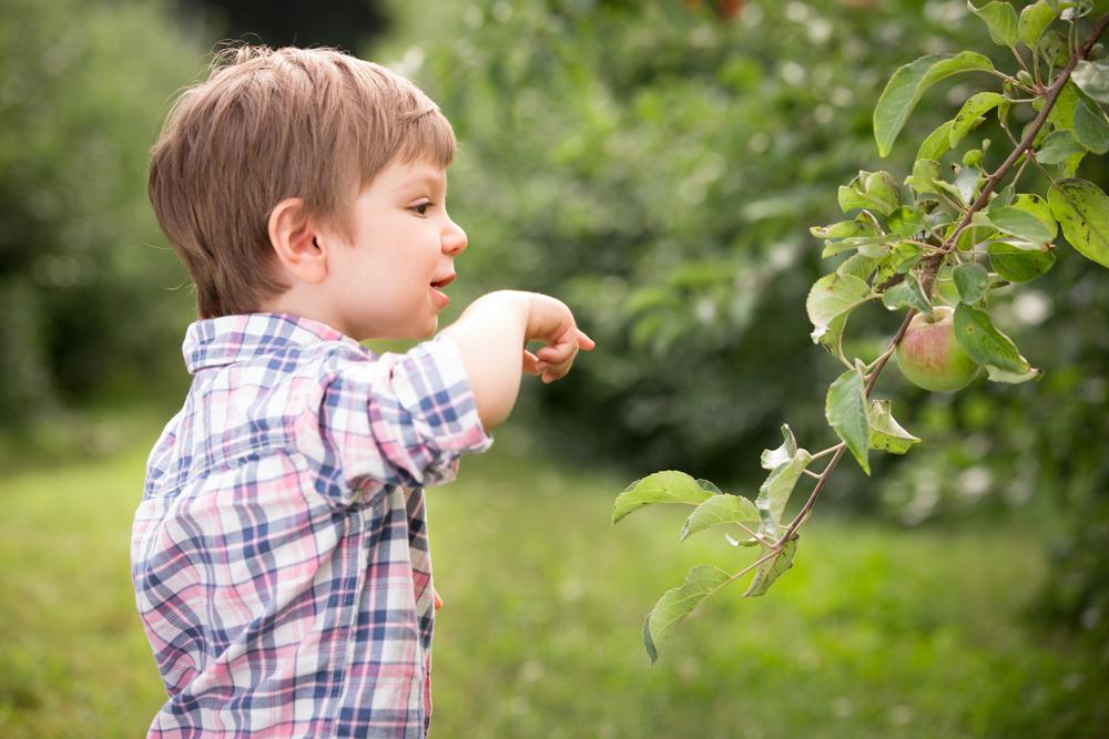 apple-orchard-new-england-boston-fall.jpg
