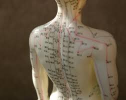 Acupuncture Model - back points