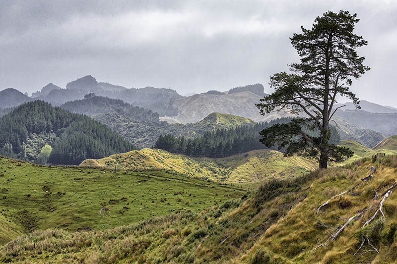 Forested Landscape Otago