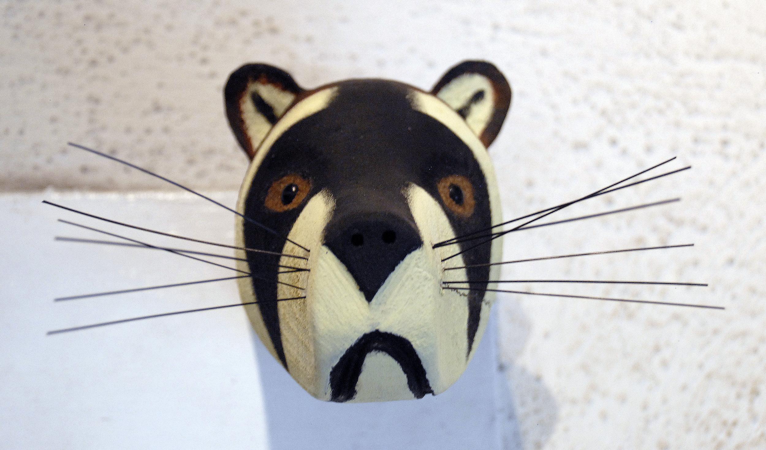 Raccoon head.jpg
