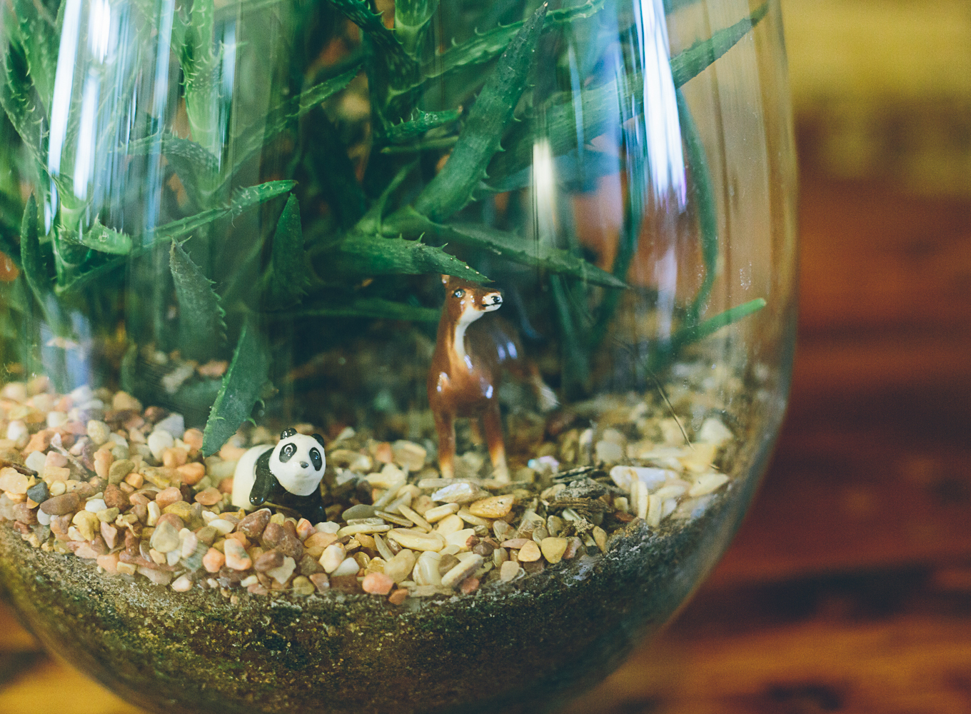 One of Haley's terrariums, a 3-year-old succulent terrarium. Succulents need different care than other types of plants (read more below).