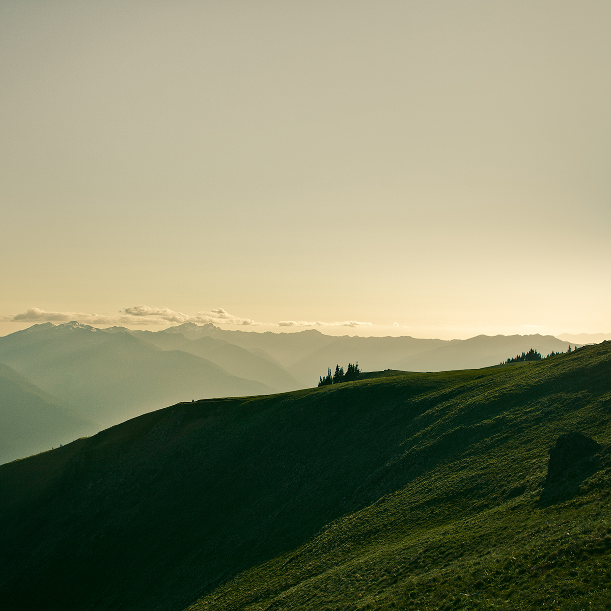 Hurricane Ridge | Washington