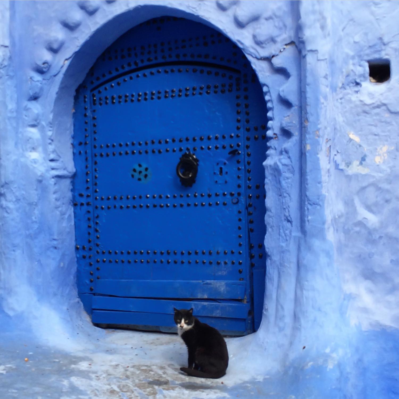 #8 - Cat plus blue = classic Chefchaouen photo