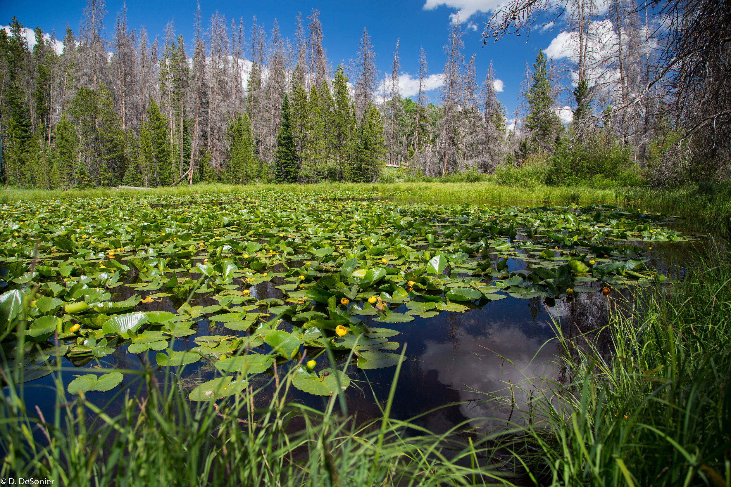 Lilypad Lake, hike from Frisco CO.