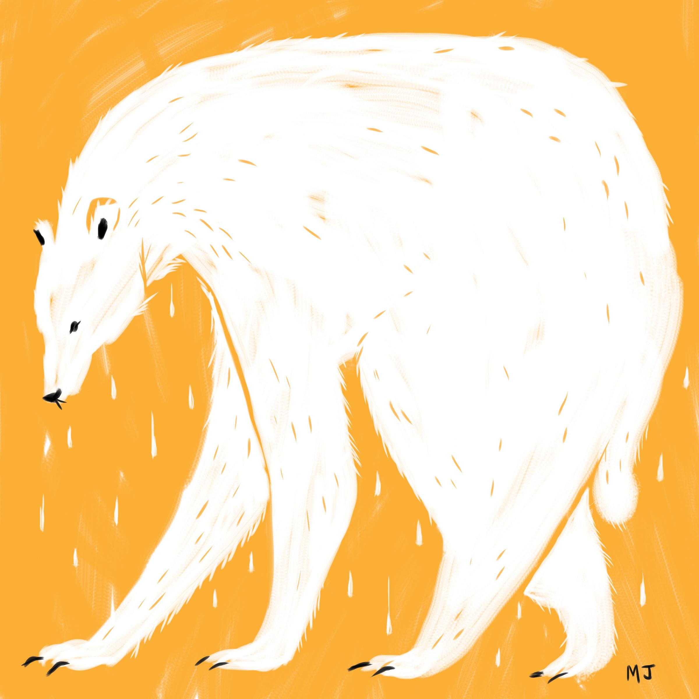 polarboy.jpg
