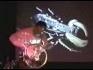 """KB """"Lost & Sound"""" Bike Wheel"""