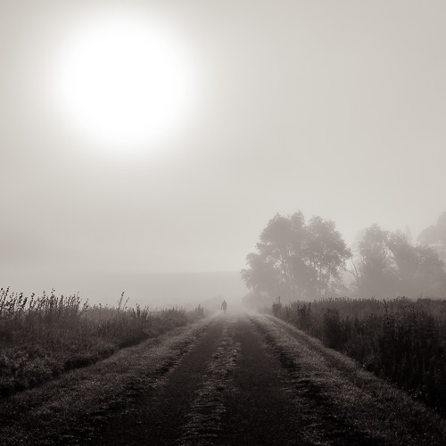 Foggy Morning, by Michael Knapstein. All rights reserved.