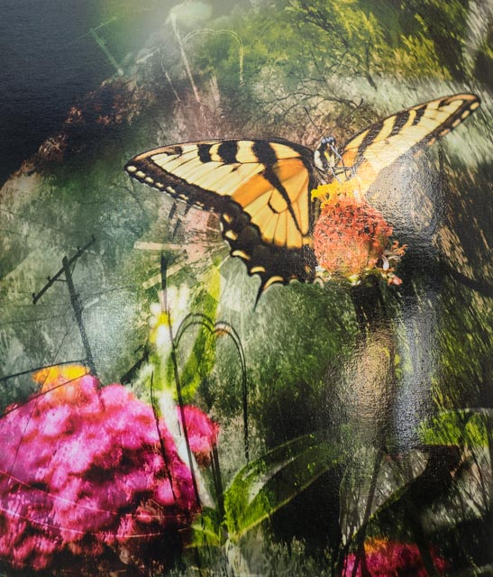 Swallowtail Fantasy, by Don Sylvester. All rights reserved.