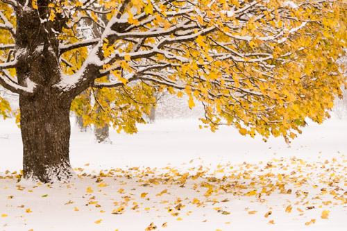 Autumn Snowfall, by Robin Downs. All rights reserved.