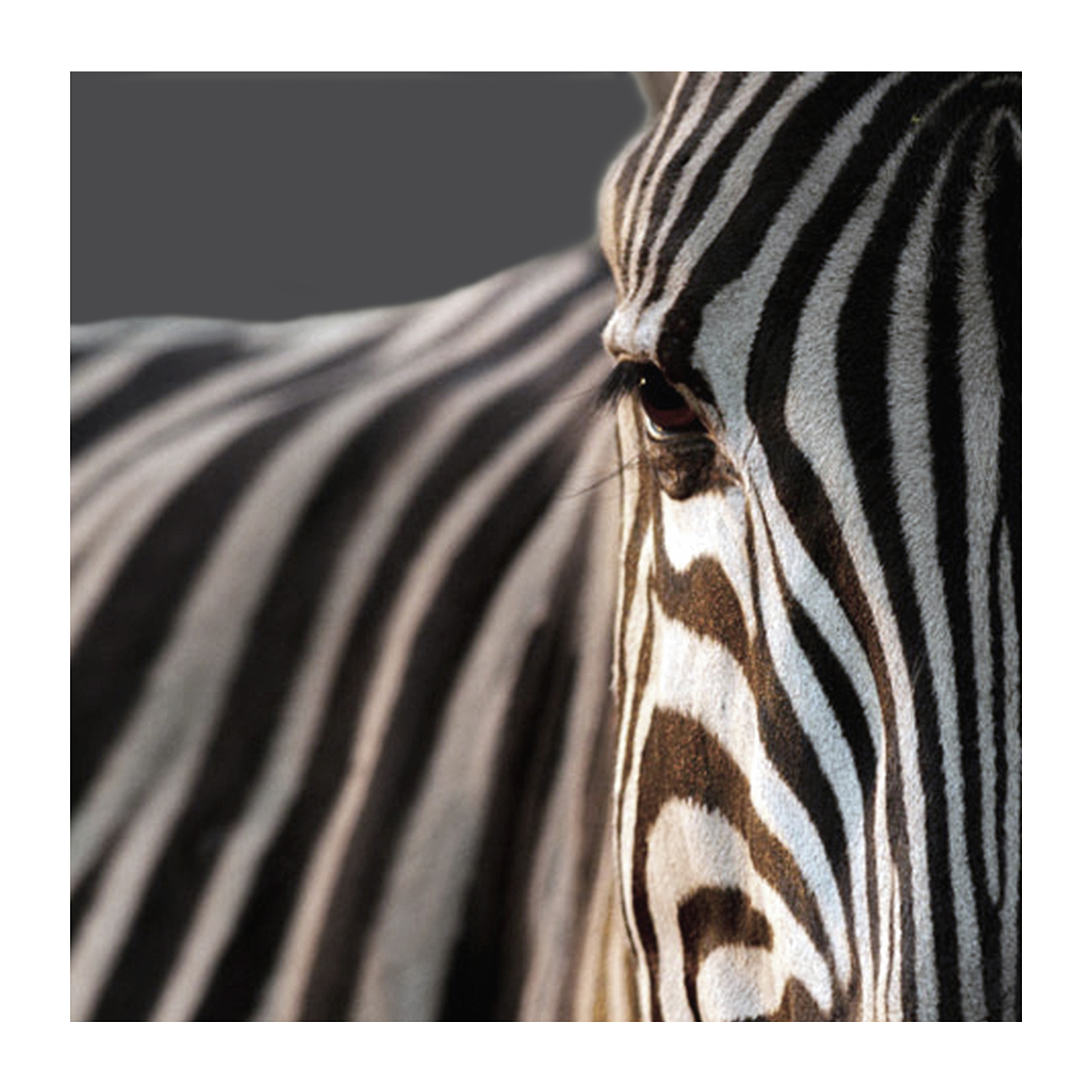 Eye of the Zebra, by Edie Swift. All rights reserved.