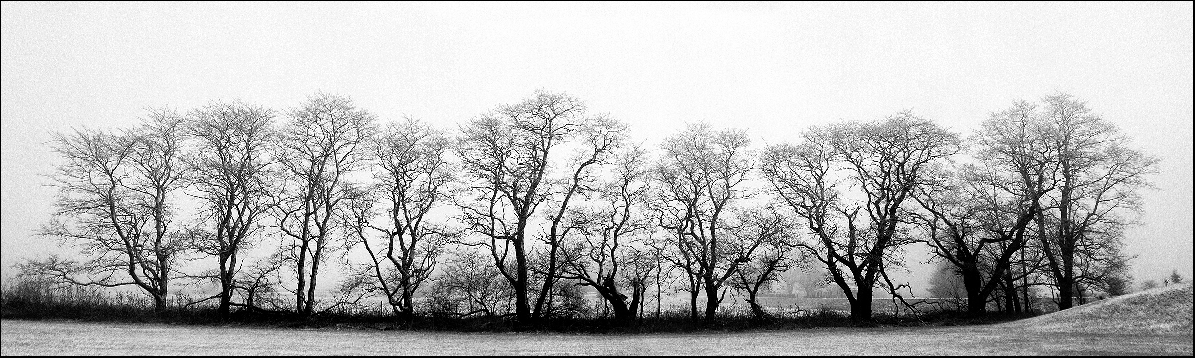 Trees  , Dick Ainsworth  Kodak Brownie 120 film camera. Seven exposures, combined in a composite panorama. Processed with various digital tools.  Dick Ainsworth ,  ainsworth@qwerty.com