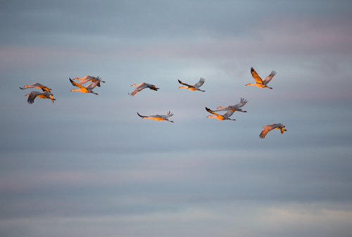 Sunset Flight, by Carolyn Knorr. All rights reserved.