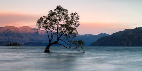 Wanaka Willow, by Andreas Friedl. All rights reserved.