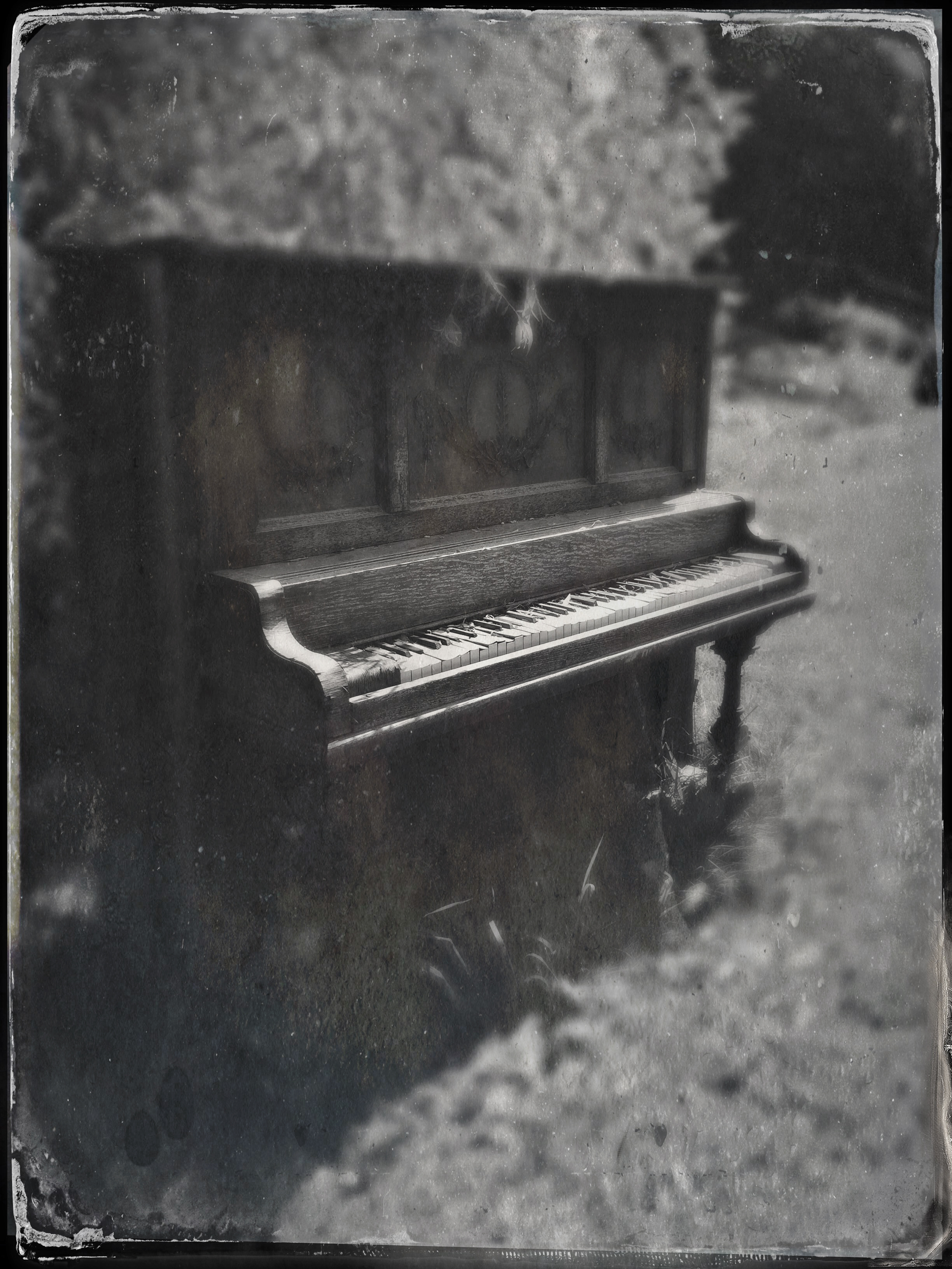 Ivories in the Valley, by Anne Connor. All rights reserved.