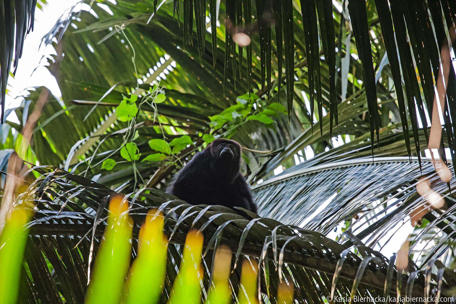 """Las deszczowy Ameryki Środkowej - """"O harpiach, ślimakach, jaskiniach i dronach czyli czego szukaliśmy w rezerwacie górskim w południowym Belize"""".Jakie są najgroźniejsze stworzenia żyjące w selvie i co jedzą drapieżne harpie? Gdzie szukać nieznanych nauce gatunków mikroskopijnych mięczaków? Po co zjeżdżać na dno leja krasowego o głębokości 100 metrów? Jak za pomocą kamery termowizyjnej znaleźć wyjce?Zapytaj / zamów zajęcia - kontakt."""