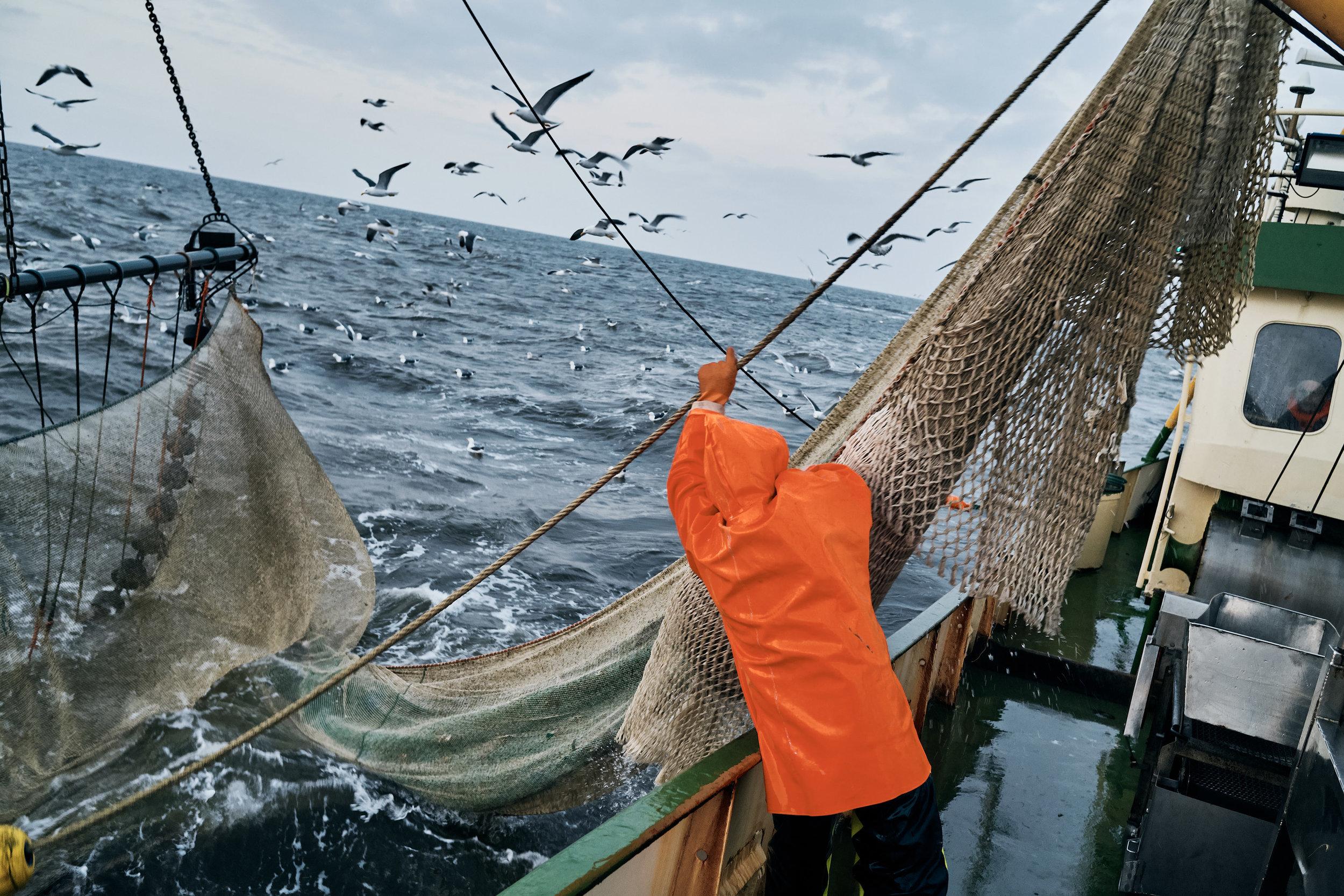 Die Wattenmeerkrabbe  Kampagne für die Erzeugergemeinschaft  Küstenfischer der Nordsee