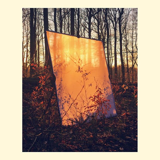 Silk in the woods #iphone #iphonex #iphonegraphic #behindthescenes #wood #forest #sunset #sun
