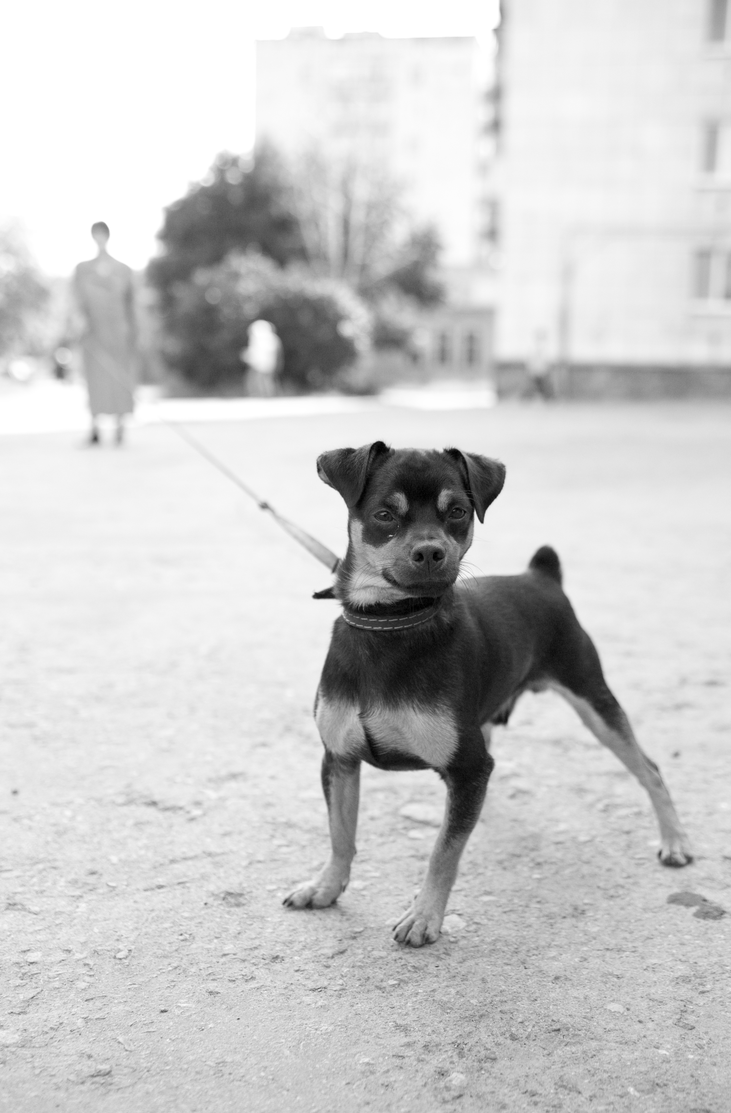 Walks on leash are perfect for letting your dog sniff - that is, take in - his world.