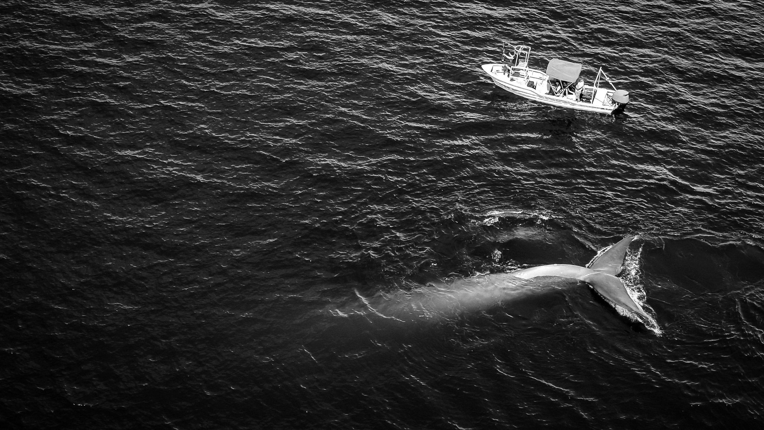 3.-Miller_blue-nr-boat.jpg