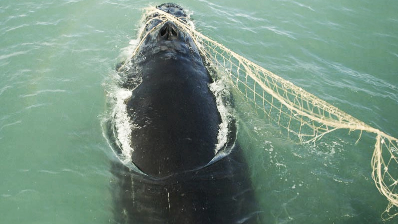 Photo credit: Sea Shepherd: Operation Milagro