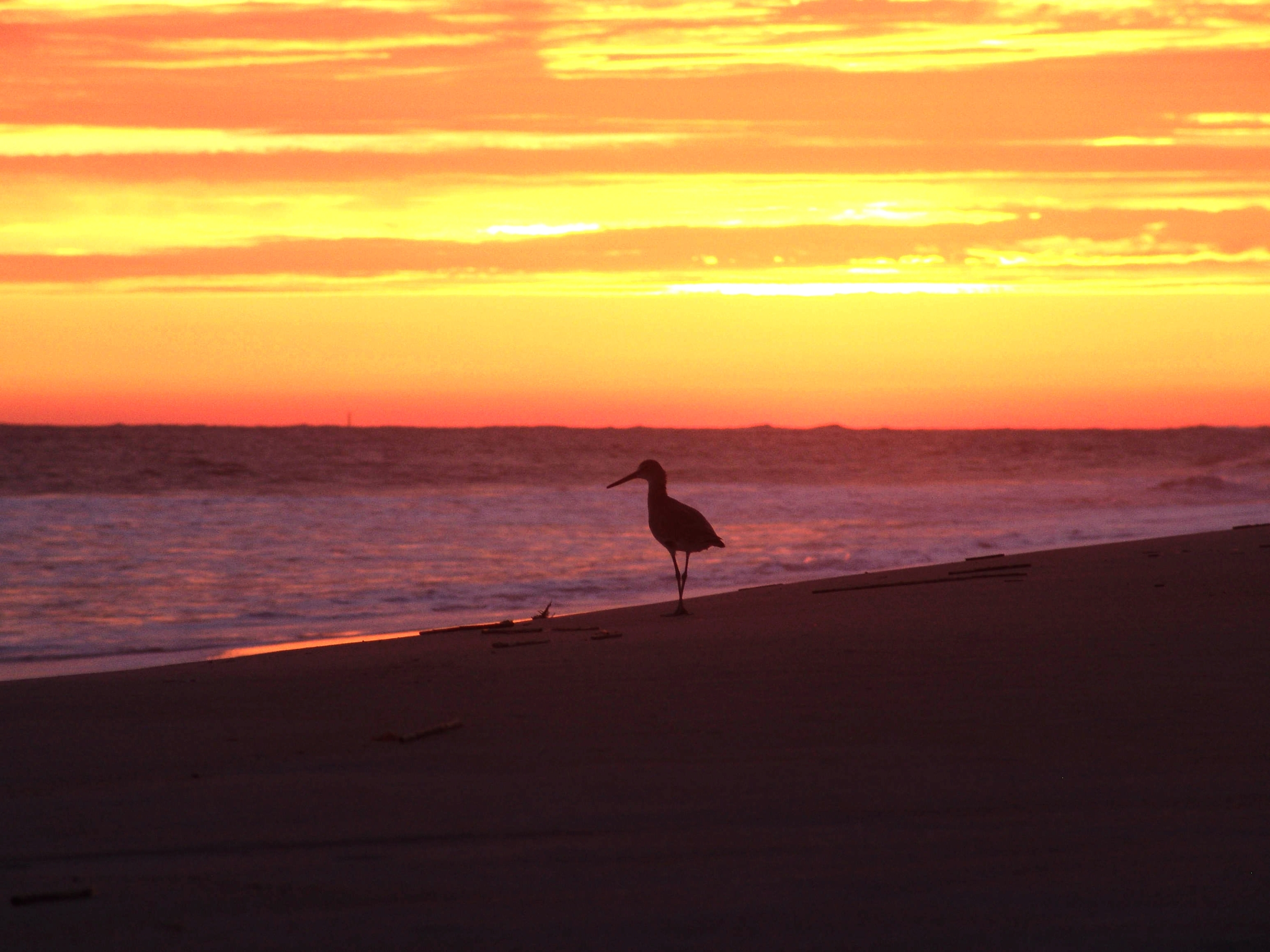 BHI Sandpiper at sunset DSC04059.jpg