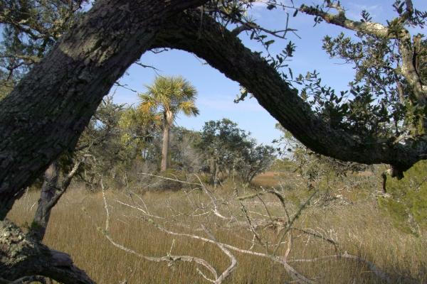 BHI Marsh SDIM2056.jpg