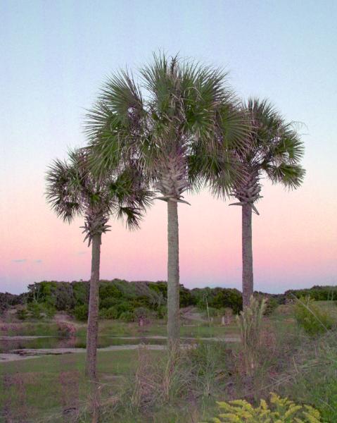 Three Palms 8x10 SDIM3329 -1.png