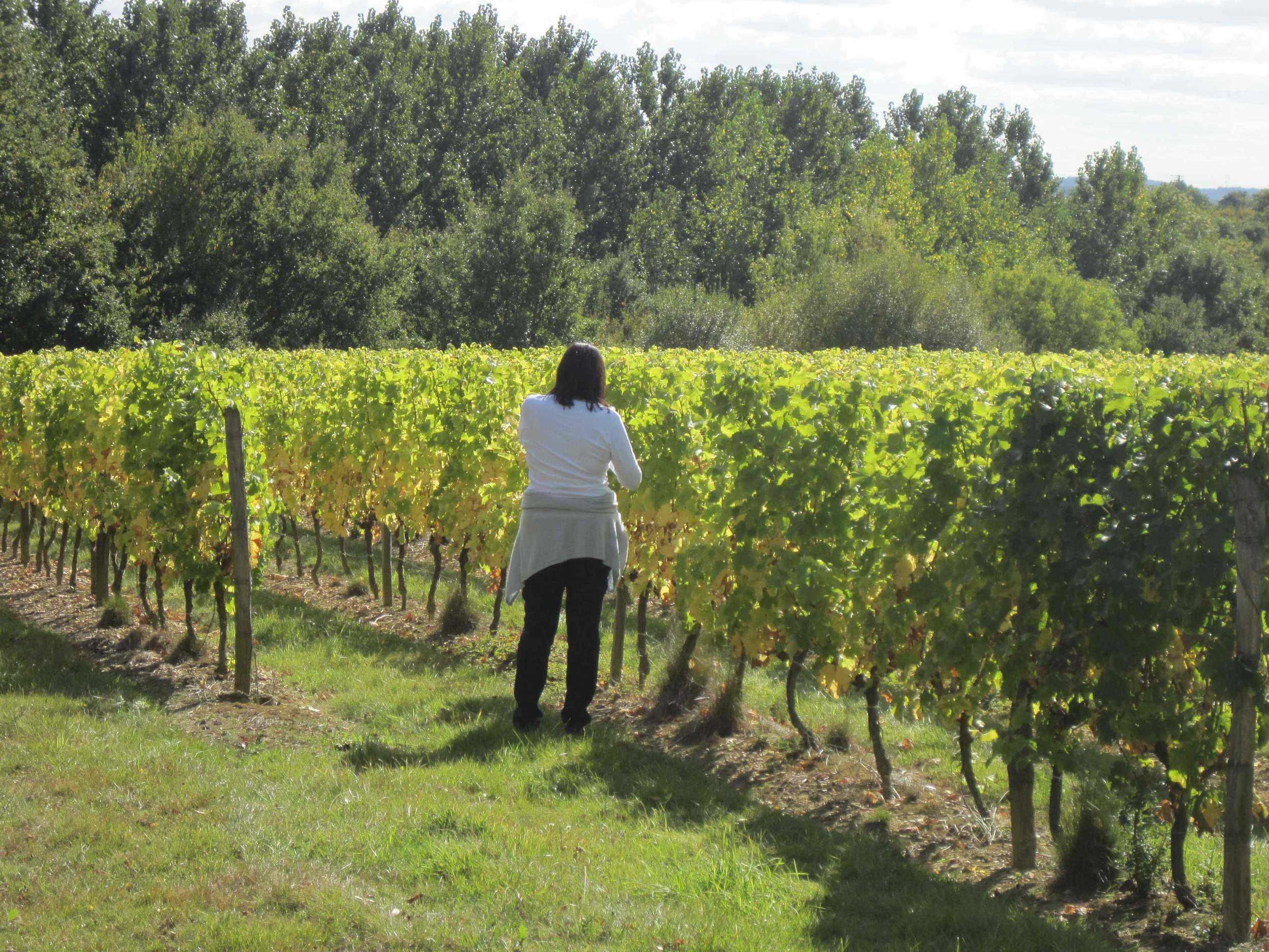Candace in the vineyard