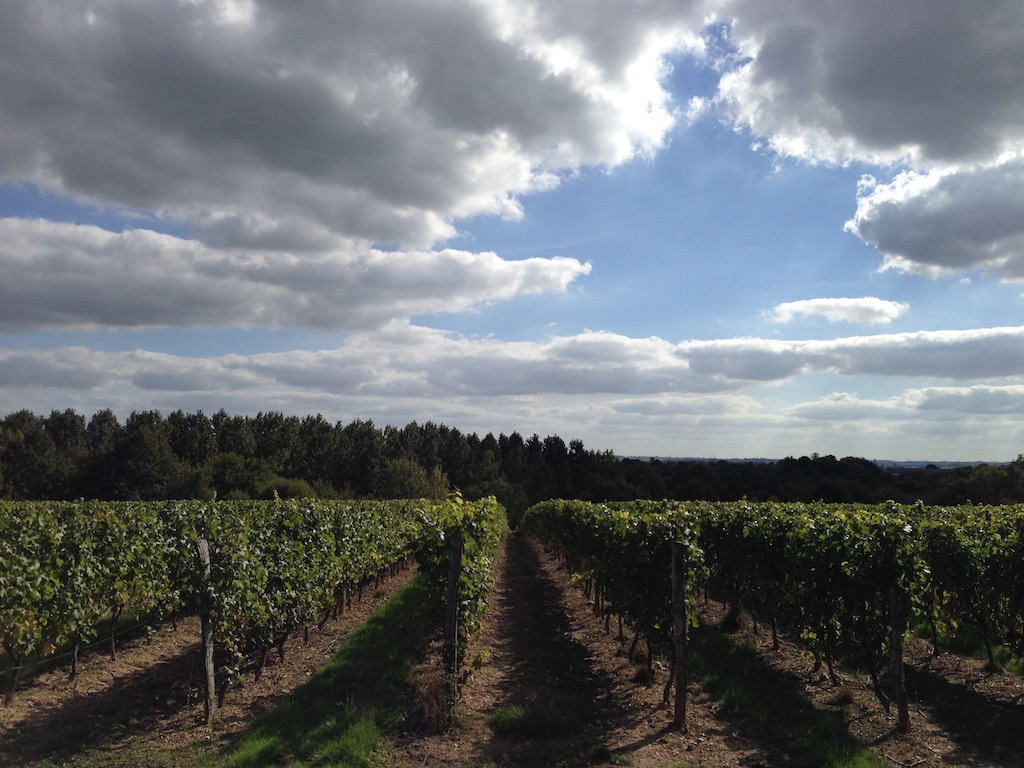 france-vineyard.jpg