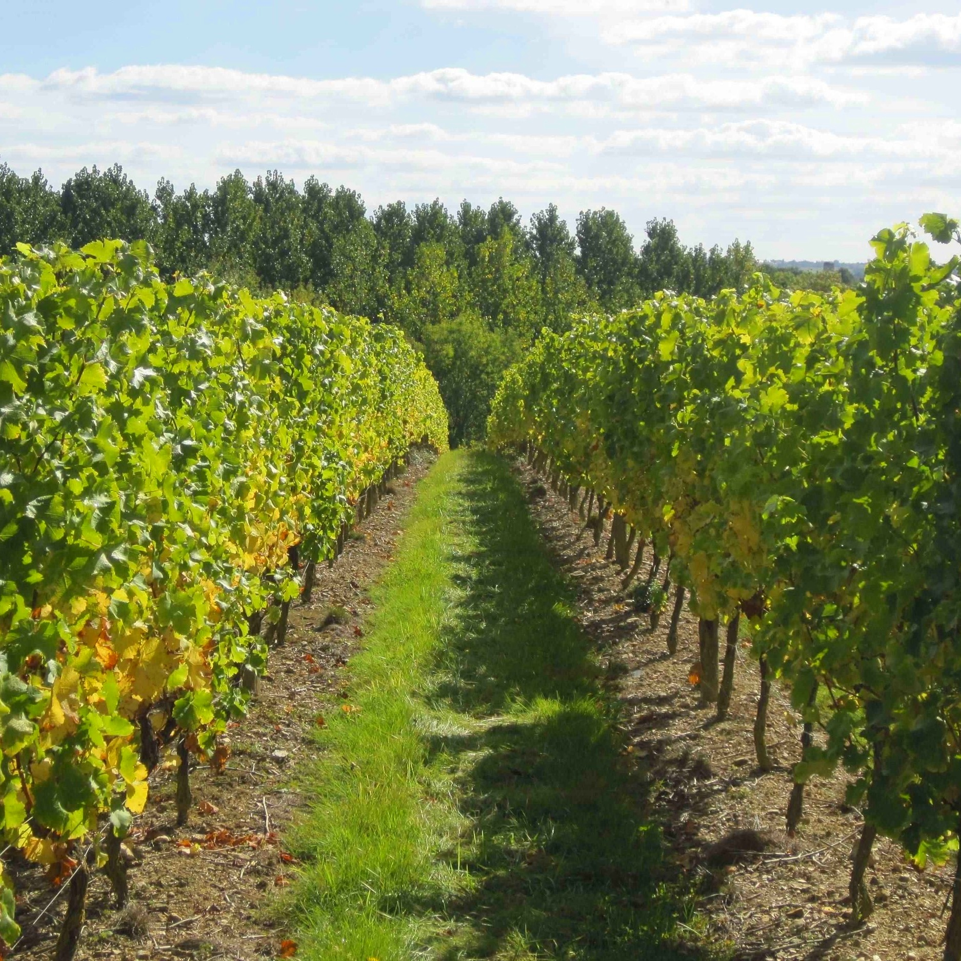 Take a walk - in the chateau vineyards