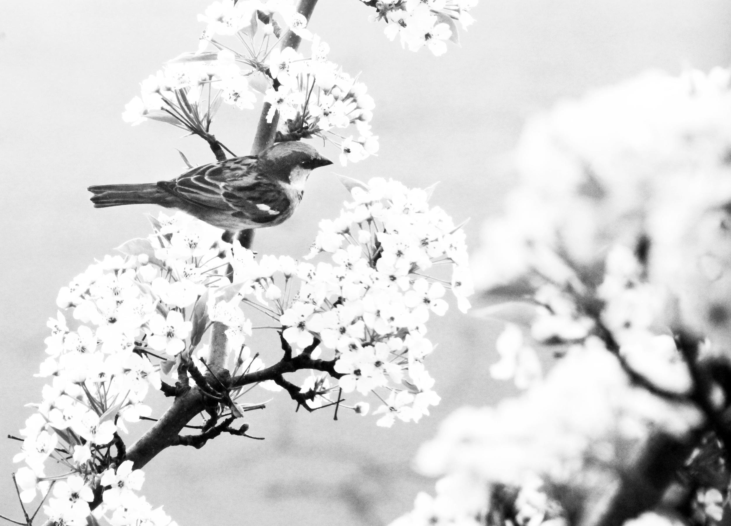 bird on flowers.jpg