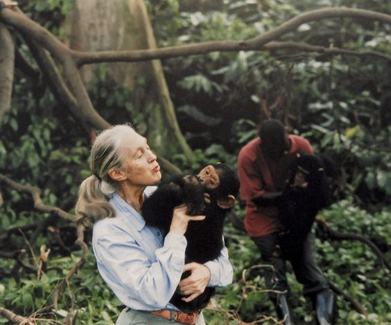 fiona dickaon blog jane Goodall 3.jpg