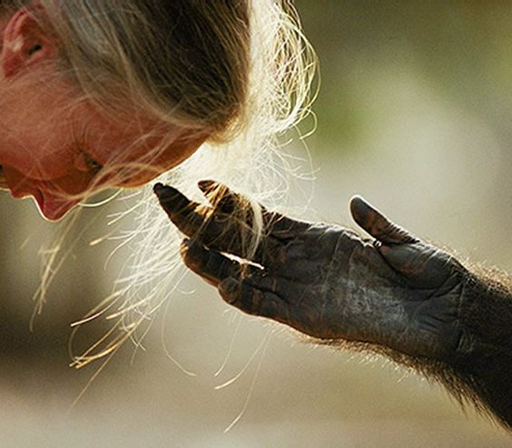 fiona dickson blog  Jane Goodall .jpg