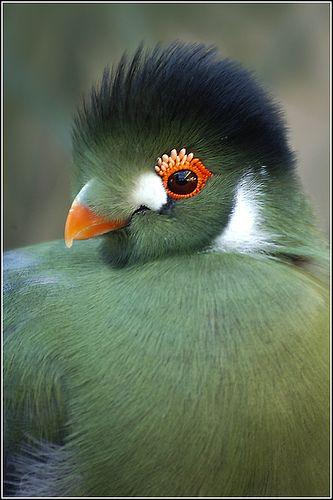 fiona dickson blog birds art 1.jpg