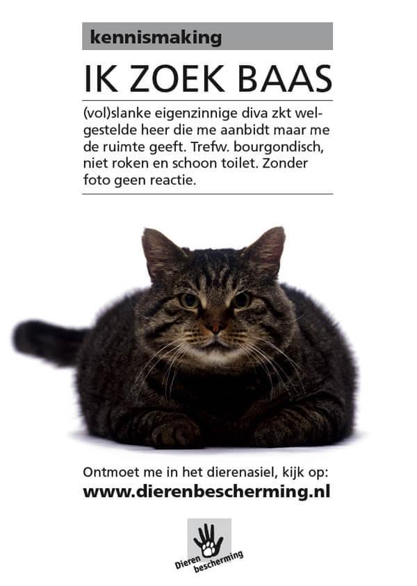 advertentie-ik-zoek-baas-campagne-dierenbescherming