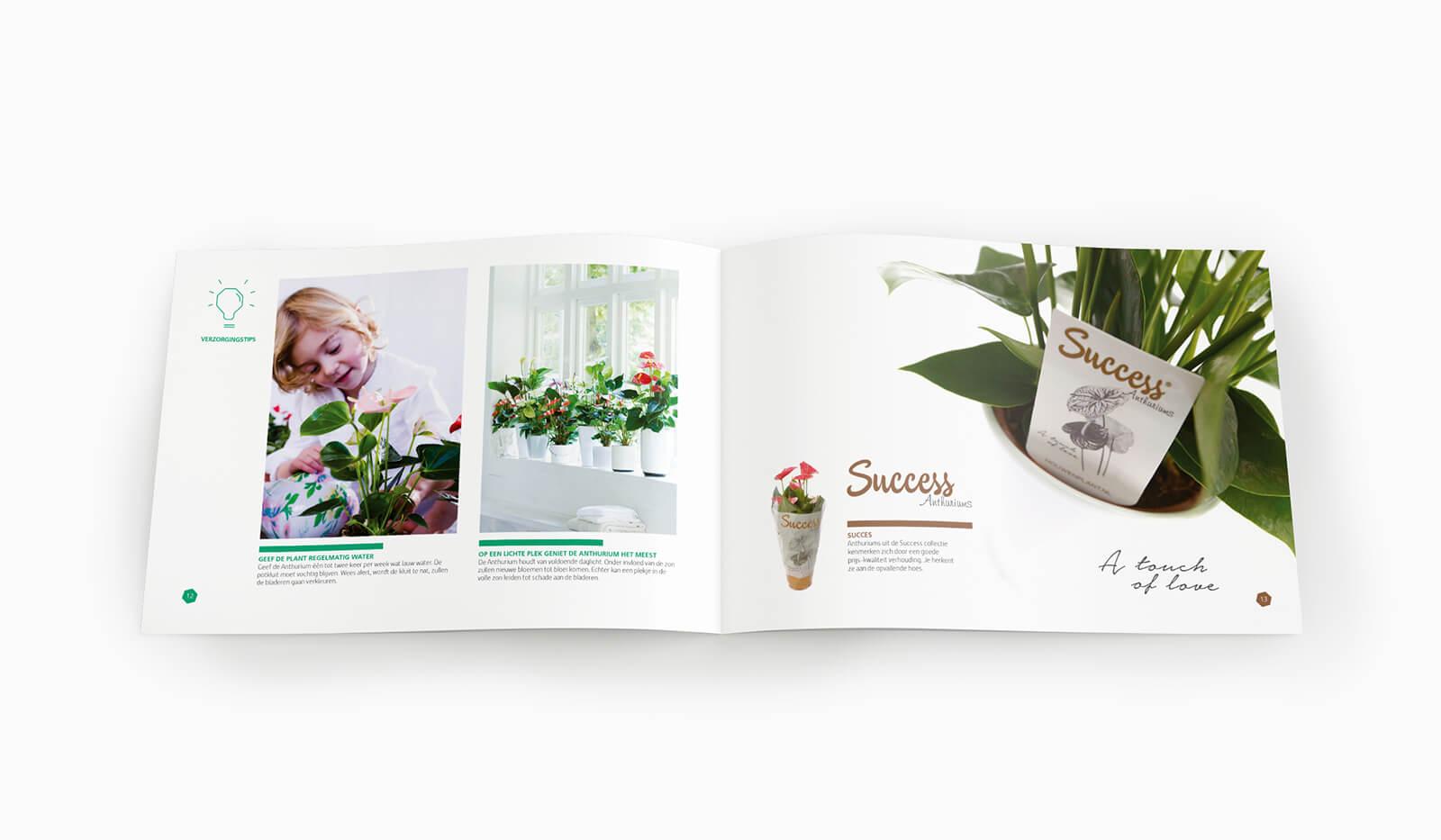 Houwenplant tip pagina.jpg