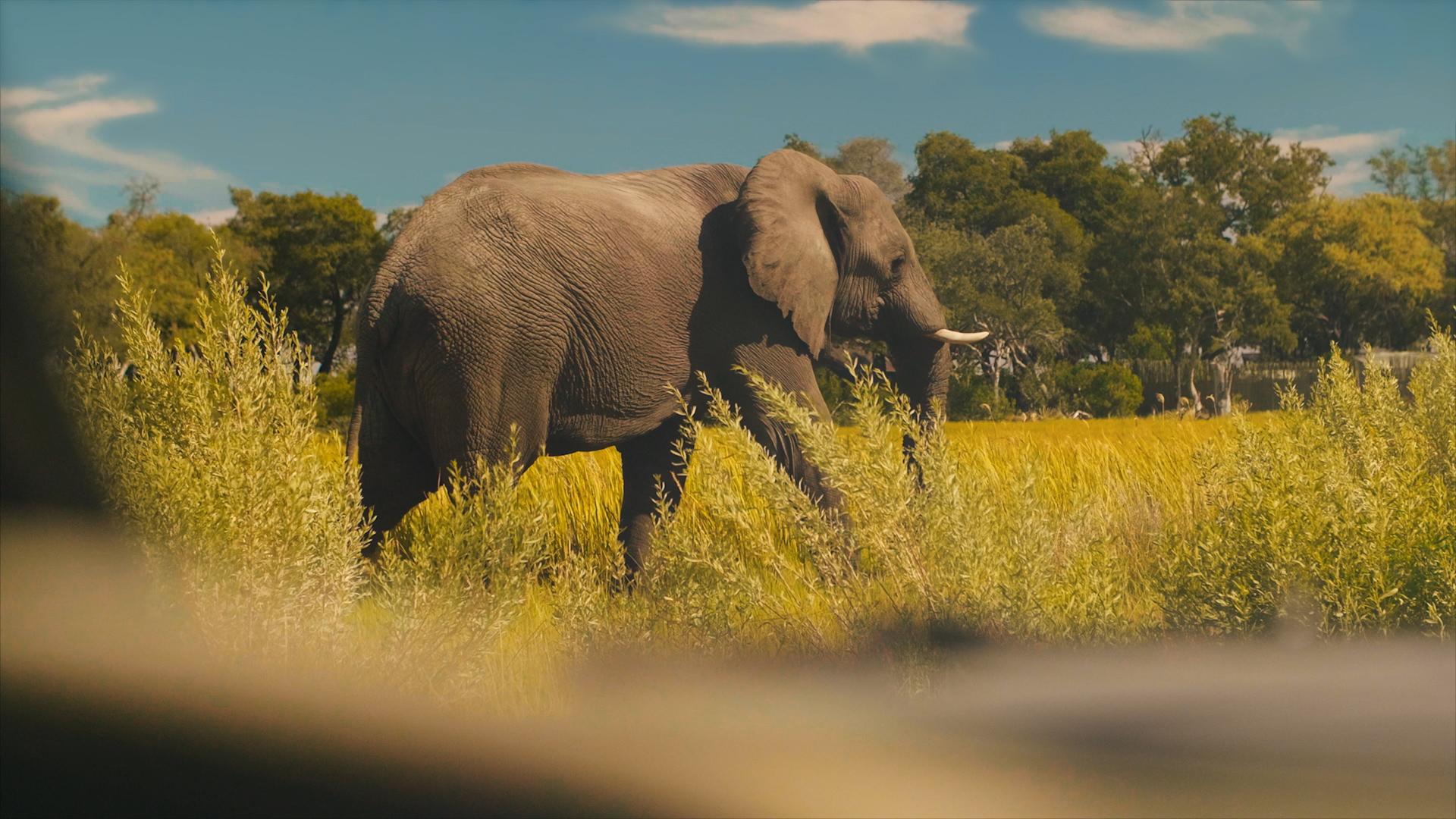 BELMOND & LPO (BOTSWANA) - BRAND FILM