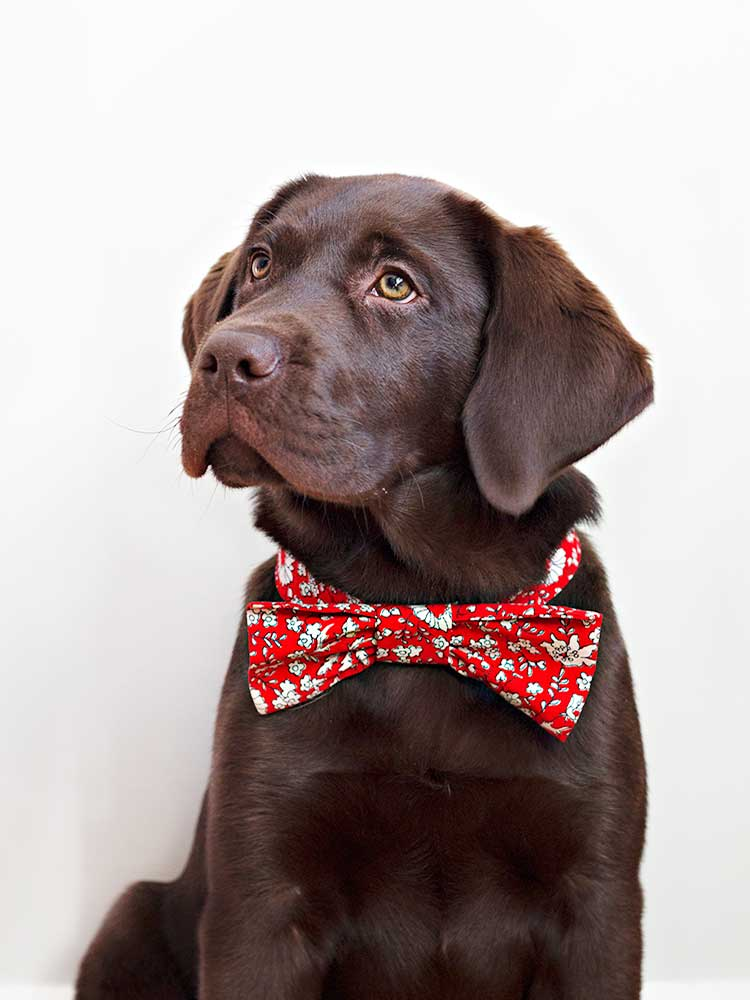 How to make a doggie bowtie for your pup