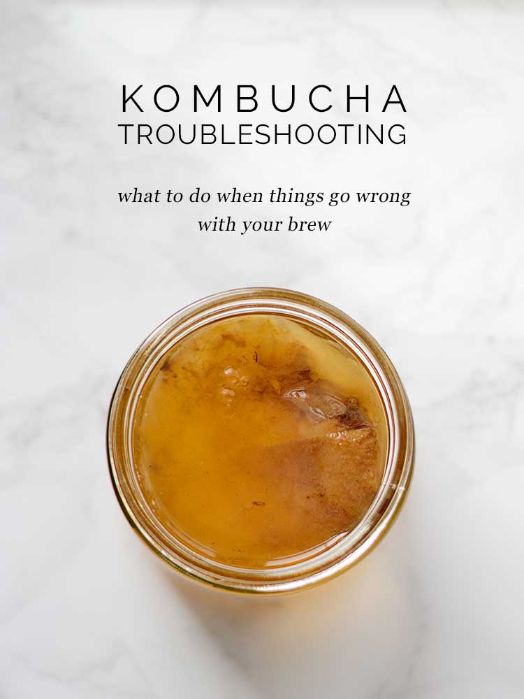 Kombucha Troubleshooting: What to do when things go wrong | Wellnesting