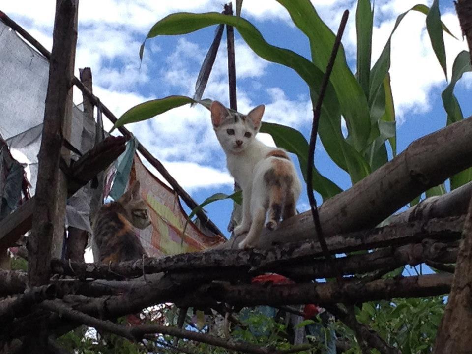 Kittens and corn, Wangduetse.