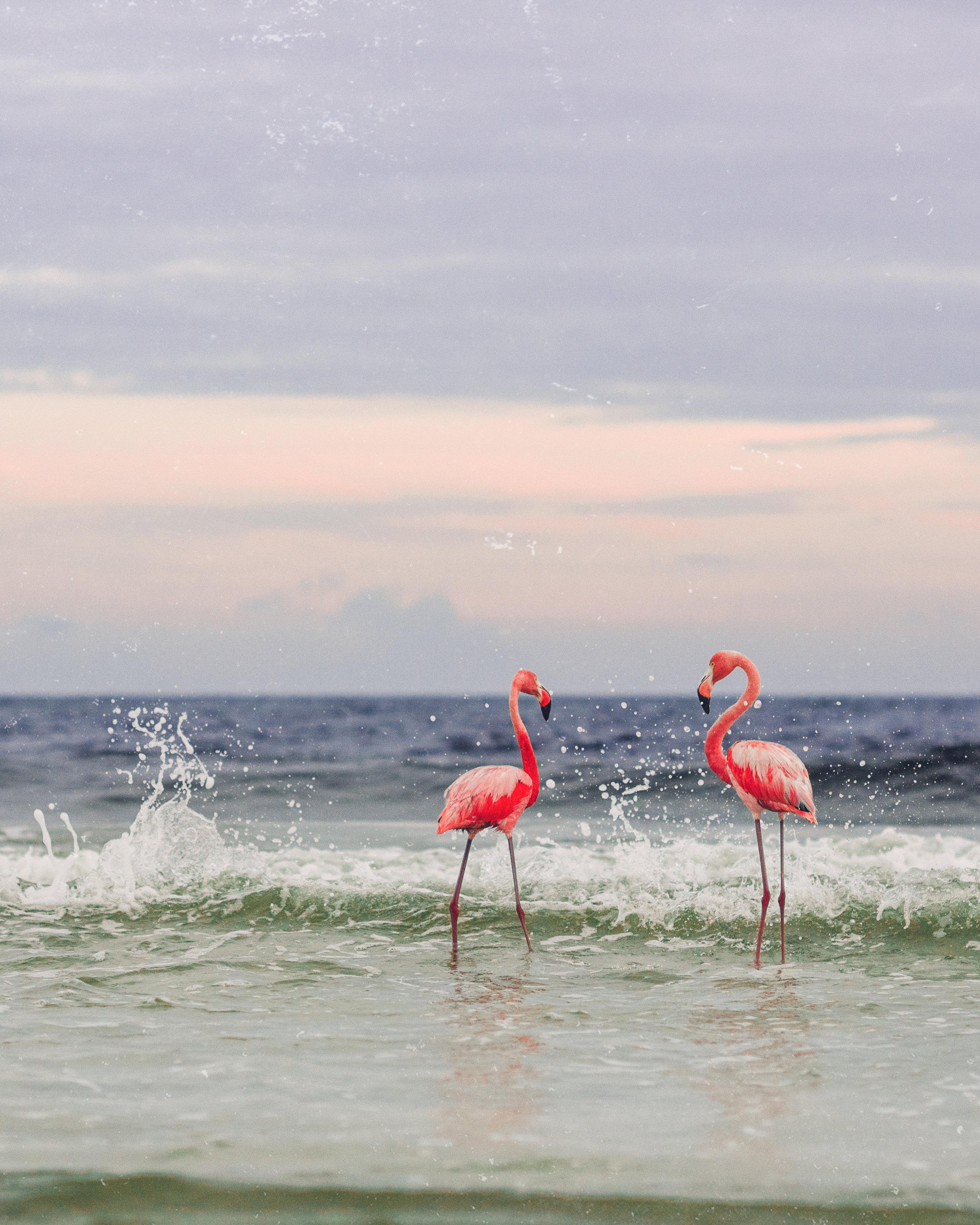 flamingos portrait 8x10 (1 of 1).jpg