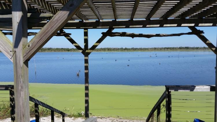Bayou Bienvenue Wetland Triangle