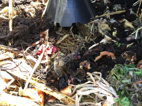"Browns, greens and ""seed"" compost together"