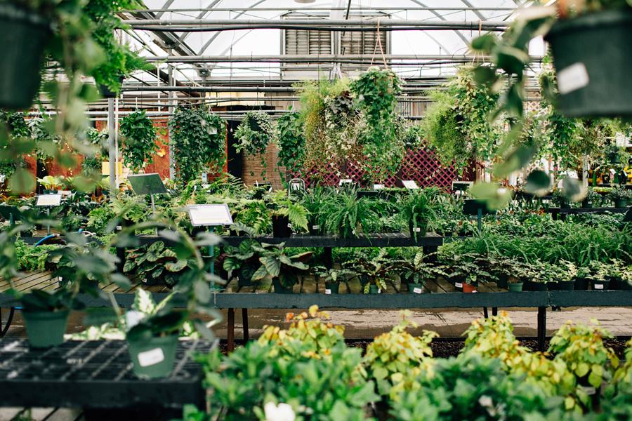 brookecourtney_blog_greenhouse-5.jpg