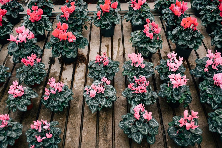 brookecourtney_blog_greenhouse-15.jpg