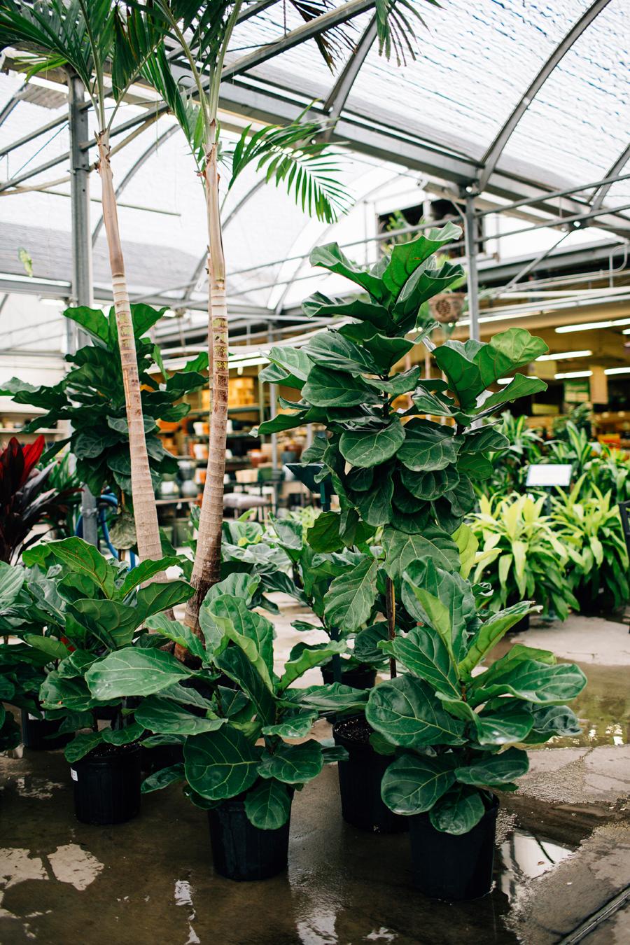brookecourtney_blog_greenhouse-21.jpg