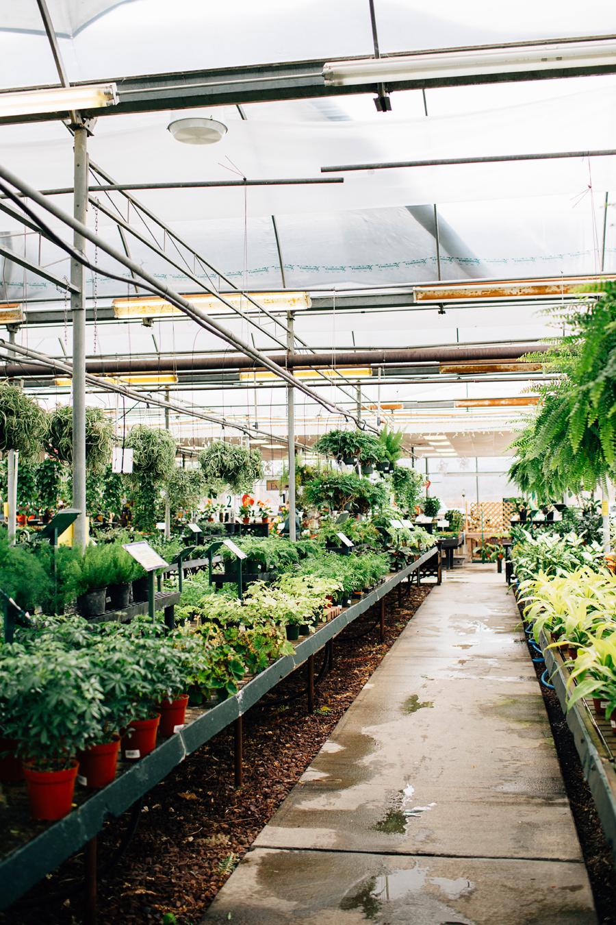 brookecourtney_blog_greenhouse-24.jpg