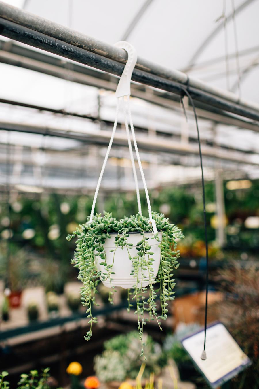 brookecourtney_blog_greenhouse-34.jpg
