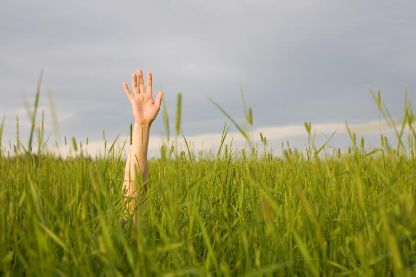 Hand in Grass.jpg